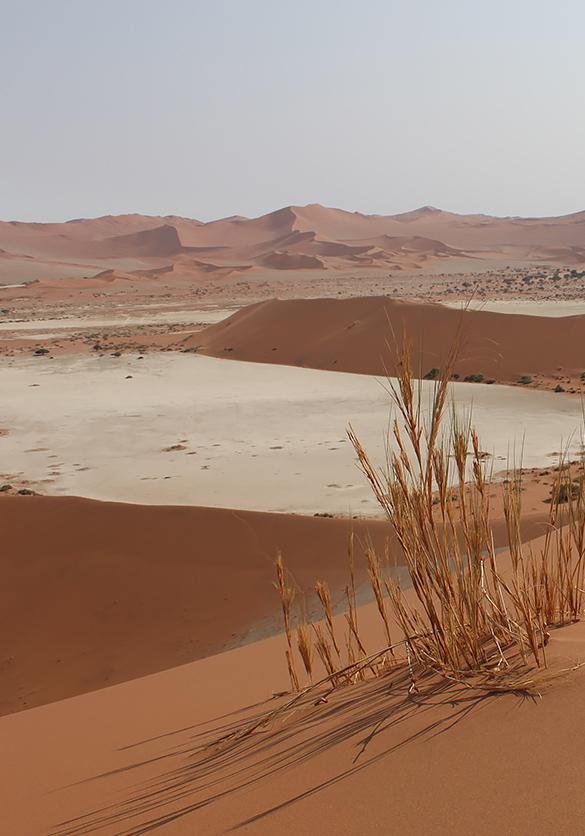 Varaschin | Moodboard | Peaceful desert background