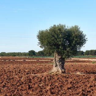 Red soil